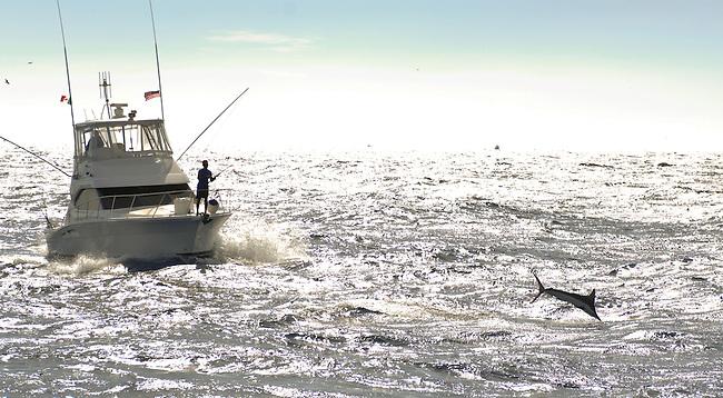 Marlin jumping near boat off Mag Bay,