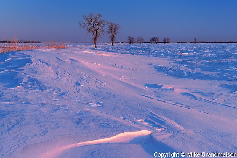 WInd blown prairie landscape in winter at sunrise<br /> Grande Pointe<br /> Manitoba<br /> Canada
