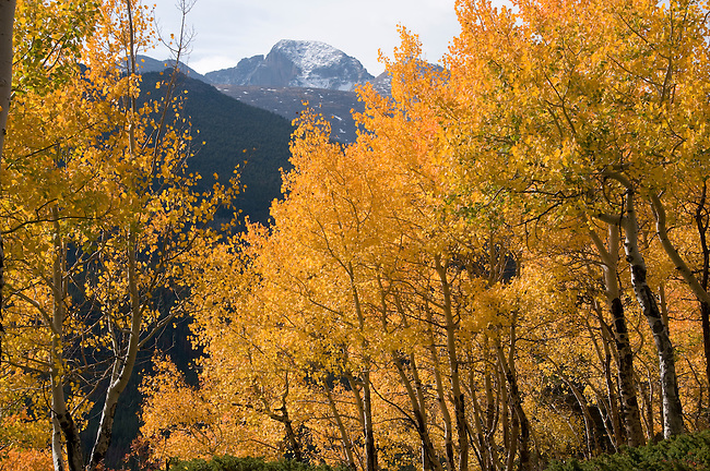 fall, color, aspen, Populus tremuloides, Bierstadt Moraine, Longs Peak, peak, mountain, morning, trees, forest, mountains, landscape, scenic, Rocky Mountain National Park, Colorado, Rocky Mountains, USA