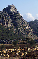 Europe/Turquie/Env de Karkutelli : Moutons sur le plateau