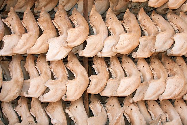 Tsavo skull collection