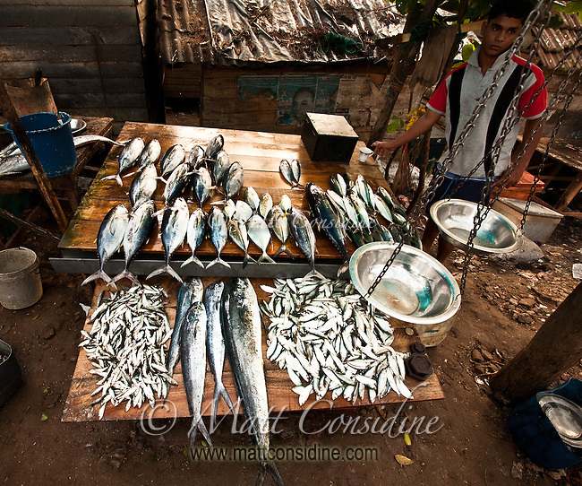 A great variety of fish, fresh off the boats.<br /> (Photo by Matt Considine - Images of Asia Collection)