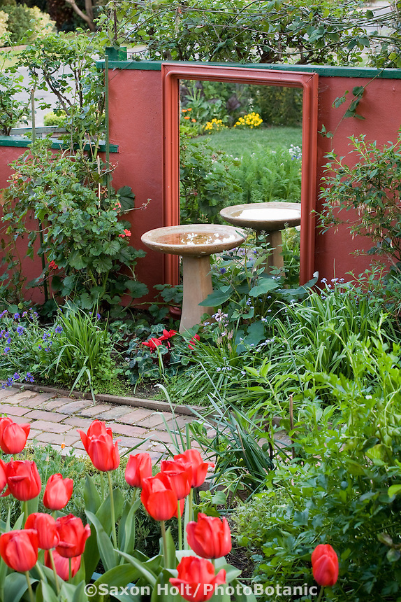 Birdbath by reflecting mirror and painted wall in Rosalind Creasy front yard garden with tulips 'Red Impression'