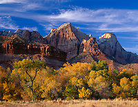 Zion National Park, UT<br /> Evening sun on the Towers of the Virgin and the Sentinel rising above fall colored cottonwoods