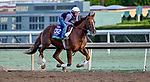 October 28, 2019 : Breeders' Cup Turf entrant United, trained by Richard E. Mandella, exercises in preparation for the Breeders' Cup World Championships at Santa Anita Park in Arcadia, California on October 28, 2019. Scott Serio/Eclipse Sportswire/Breeders' Cup/CSM