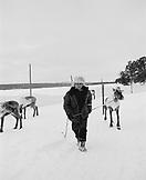 FINLAND, Hemet, Arctic, man pulling reindeer for race