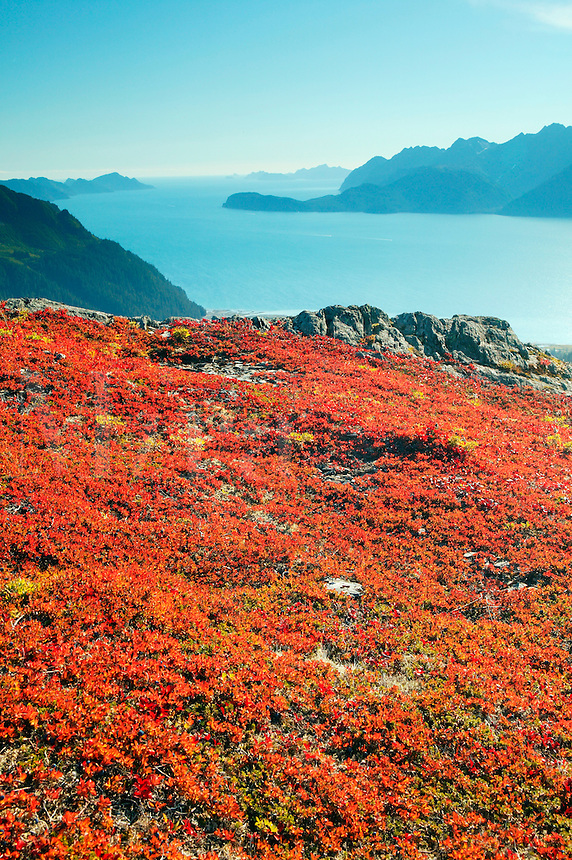 Fall colors on Mt. Alice looking down on Resurrection Bay, Chugach Natonal Forest, Seward, Alaska.