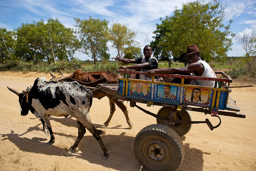 On the dirt road between Tulear and Ifaty..sur la route entre Tule?ar et Ifaty. Les chars a? boeufs sont utilise?s comme moyen de transport