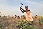 Tamara Kako chops out a shrub and she and other members of the United Methodist Women in Yei, Southern Sudan, prepare a plot of land for planting vegetables. The work is part of a group food security project. Many of them widows, the women live precariously but at peace after having returned from refugee camps in neighboring Uganda and the Congo in recent years. A 2005 Comprehensive Peace Agreement laid the foundations for peace in Sudan's south after decades of war. NOTE: In July 2011, Southern Sudan became the independent country of South Sudan
