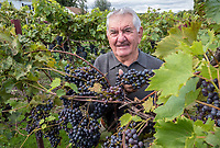 "Peter Bernardi, an 83-year-old retired boiler maker started growing grapes on his 50 acre Blackwell Sideroad farm four years ago and he couldn't be happier with the results. ""I wanted to see if grapes would grow in this area,"" he said ""The results are very good."" He has grown four varieties; Merlot, Vidal, Seyval Blanc and Chambourcin on 200 vines. ""I'm retired and I like to make my own wine,"" he said."