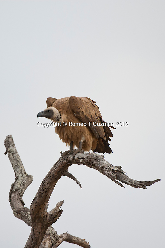 July 28, 2012: Timbavati outside Kruger National Park in South Africa