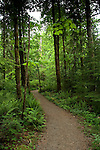 Moss covered trees along a track on the Cambell river, Vancouver Island, British Columbia, Canada.