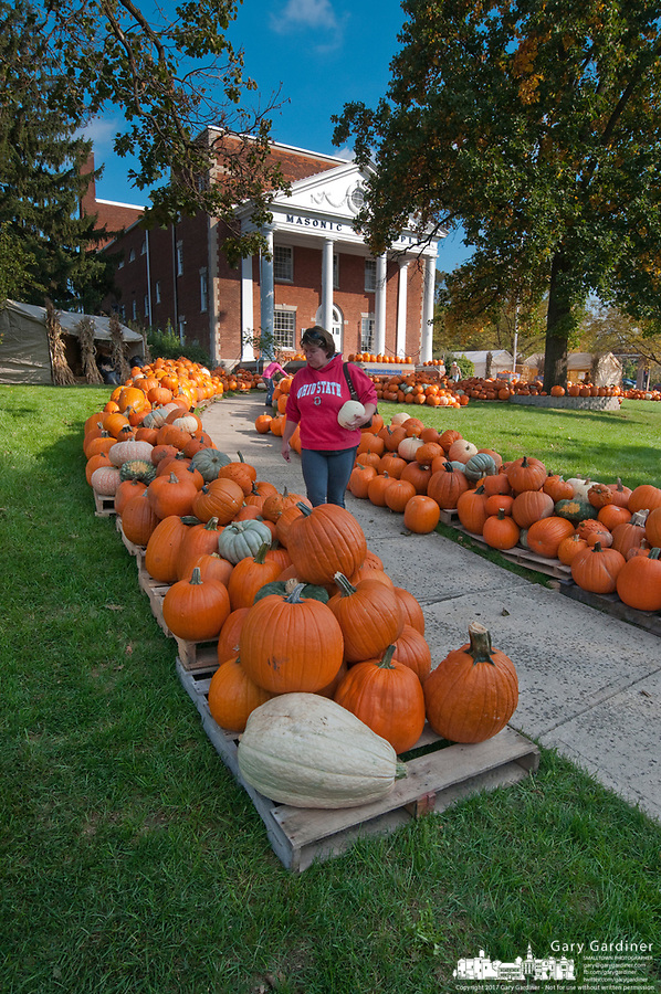 A woman searches for the best pumpkins among the hundreds displayed for sale in the front yard of the Masonic Temple in Westerville, OH. The pumpkins are a fund raiser for Boy Scout Troop 560.