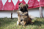Native American Indian dog with beaded collar