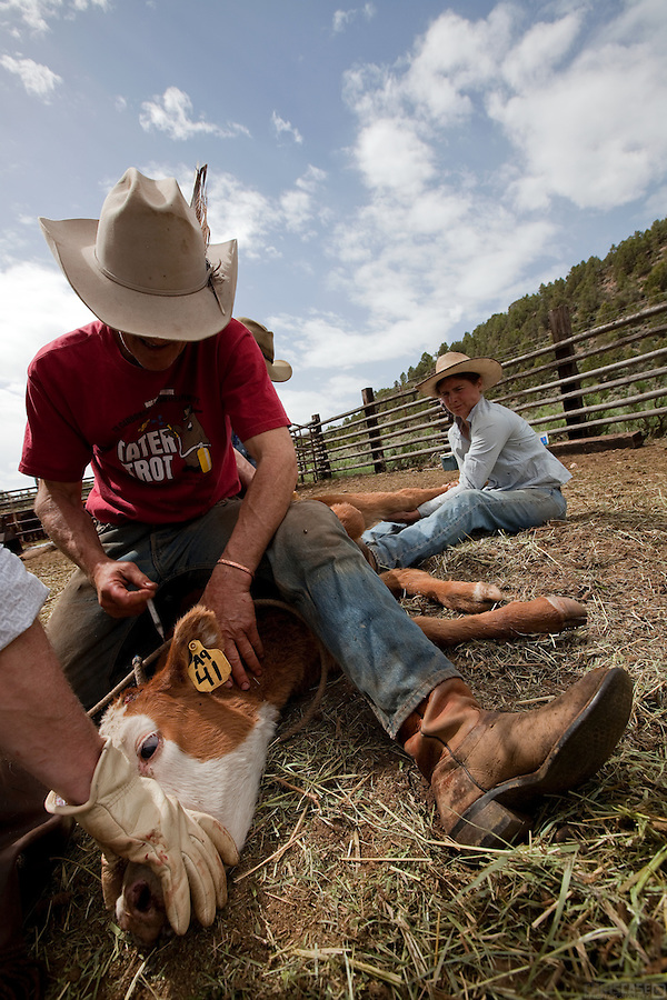 In late May, the calves are branded and vaccinated on Bill Fales' ranch. Fales, owner of Cold Mountain Ranch in Carbondale, Colorado, has been ranching his sliver of land in the Roaring Fork Valley since 1973. <br /> <br /> Development, oil and gas extraction, and mechanized recreation all threaten the valley--and his livelihood. Not surprisingly, Fales is a proponent of conservation, having placed his property in a land trust in perpetuity. He is also in favor of the expansion of wilderness designation within his and adjoining counties. <br /> <br /> Ranching in Colorado would, arguably, not exist without the use of public lands. Fales' ranch is no different. In order to give his animals the space they need in the summer--and the pasture grasses on his ranch property the time they need to grow high in order to feed his cattle come winter--he must graze on public land. That means securing grazing permits on BLM and U.S. Forest Service land. But it does not preclude the use of wilderness lands either.<br /> <br /> Unknown to much of the public, wilderness areas can serve as grazing lands under the Wilderness Act of 1964. In fact, Fales grazes on Maroon Bells-Snowmass Wilderness area; another permit area is being considered for wilderness designation. His permit would remain if the new designation came to fruition, being &quot;grandfathered&quot; in by that original Wilderness Act.