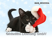 Kim, CHRISTMAS ANIMALS, WEIHNACHTEN TIERE, NAVIDAD ANIMALES, photos+++++,GBJBWP34541A,#xa#