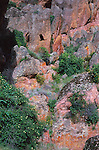 Rocks and bird of prey, Pinnacles National Monument, California USA