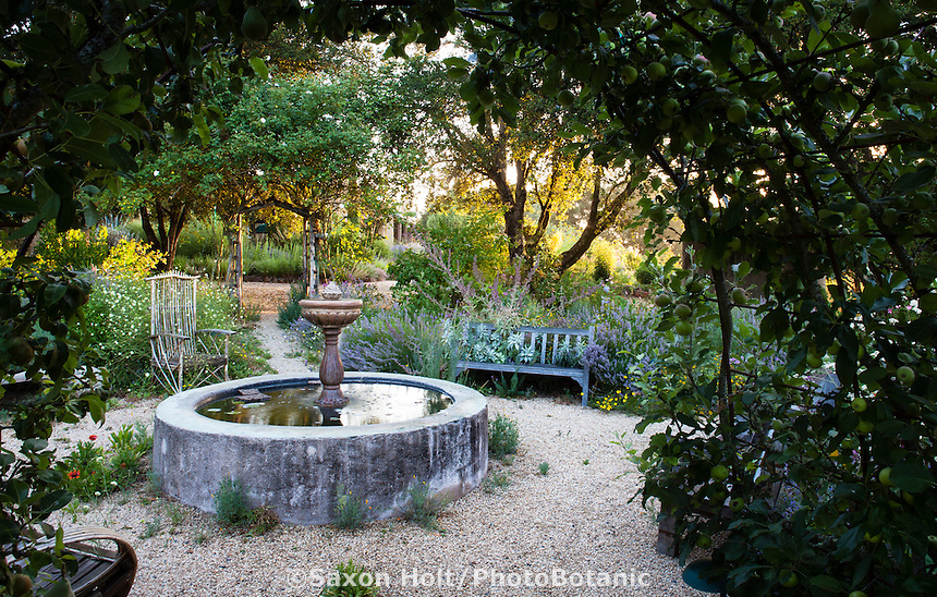Morning light through oak trees and arbor in Melissa Garden (Sebastopol, California) with fountain in gravel courtyard with benches