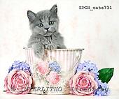 Xavier, ANIMALS, cats, photos+++++,SPCHCATS731,#a# Katzen, gatos