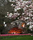 Apr. 30, 2011; Grotto in spring...Photo by Matt Cashore/University of Notre Dame