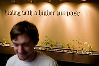 An employee of Denver's Apothecary of Colorado weighs out marijuana for one of the dispensary's clients.  The dispensary is located in downtown Denver and caters to upscale clientelle...Denver-based medical marijuana dispensaries --Colorado is one of 19 states to permit the medicinal use of marijuana.  In the city of Denver, well over 100 marijuana dispensaries have sprung up to meet the demand.  Patients are required to register with the state and have a valid doctor's note for dispensaries to sell them marijuana.