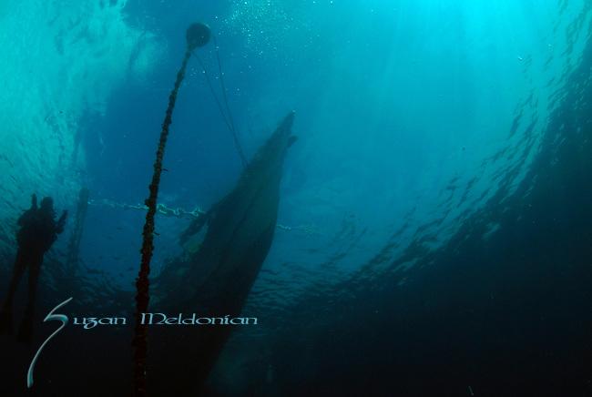 Philippine Panga from underwater _w_Diver