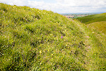 Chalk scarp slope with dry valleys at Roundway Hill,  near Devizes, Wiltshire, England