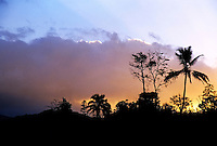 Coconut trees silhouetted at sunset, Sulphur Bay Village, Ipekel Ipeukel, Tanna Island, Vanuatu.