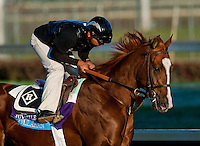 Dullahan exercises in preparation for the 2011 Breeders' Cup at Churchill Downs on November 1, 2011.