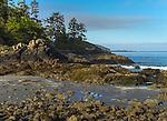 Vancouver Island, British Columbia:<br /> Morning light on the rugged coast of MacKenzie Beach near Tofino