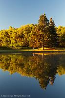 Trees reflected on pond at sunrise, Palouse region of eastern Washington.
