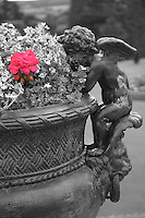 An angel perched atop of a handle of a large planter, appears to dreamily examine the red flower amidst its black and white counterparts, Ireland