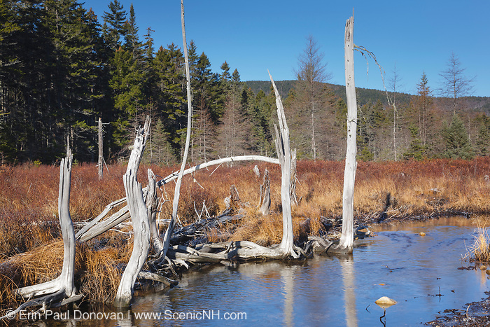 Meadow Brook during the autumn months. Located along the Sawyer River Trail in Livermore, New Hampshire USA. The  Sawyer River Trail follows the old Sawyer River Railroad,  which was an logging railroad that operated from 1877 - 1928.
