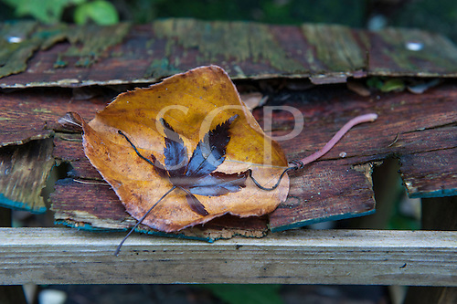 Autumn leaves on rotting wood, underlined by a single solid wooden cross-piece