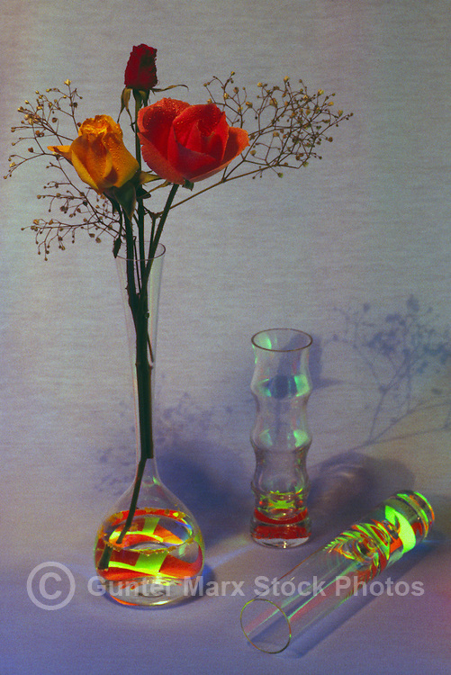 Three Roses - Yellow and Red - in Glass Vase against Gray / Blue Background