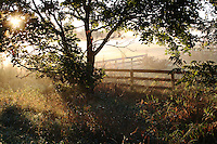 Sunrise over Misty Field with Tree And Farm Fence