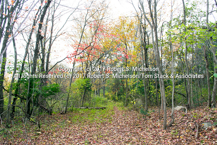 Deciduous forest, Randolph, Massachusetts