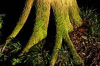 GERMANY, beech forest / Mecklenburg-Vorpommern, intakter Wald, Laubwald mit Buchen im Nationalpark Jasmund