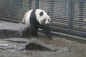 Ueno Zoo Giant Pandas mate after four-year hiatus