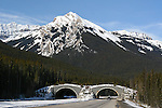BANFF NATIONAL PARK WILDLIFE/ANIMAL OVERPASS