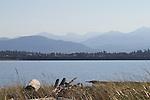 Dungeness Spit, Dungeness National Wildlife Refuge, Olympic Peninsula, Puget Sound, Washington State,