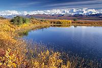 Autumn tundra and taiga, kettle pond, Alaska range mountains, Denali National Park, Alaska.
