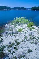 Mossy Bluff, Great Island, Castine, Maine, US