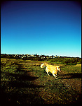 A dog runs around a park in Dee Why, Sydney, Australia.