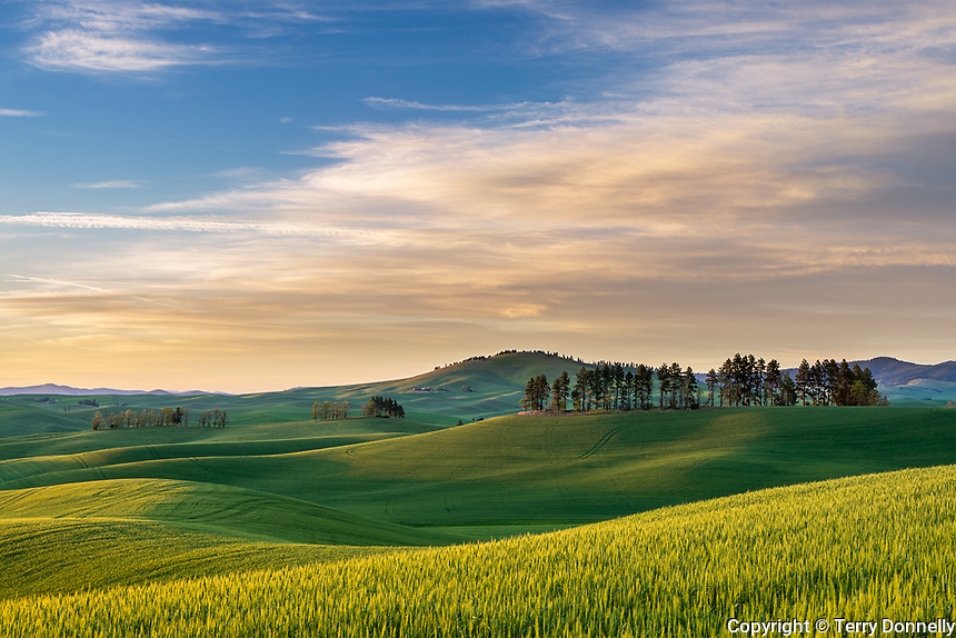 Whitman County, WA: Sunset over rolling hills of the Palouse region