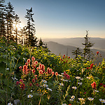 Idaho, North, Kootenai County, Kingston. Wildflowers under a sunset sky in the St. Joe District of the Idaho Panhandle National Forest in  summer.