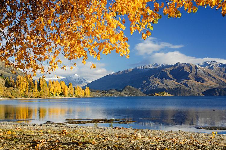 Autumn trees reflected in Lake Wanaka, Southern Lakes, New Zealand - stock photo, canvas, fine art print