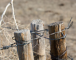 Barbed wire fences stretch for miles across the northeastern Colorado prairie.