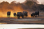 Elephants At Water Hole, Hwange Natl. Park