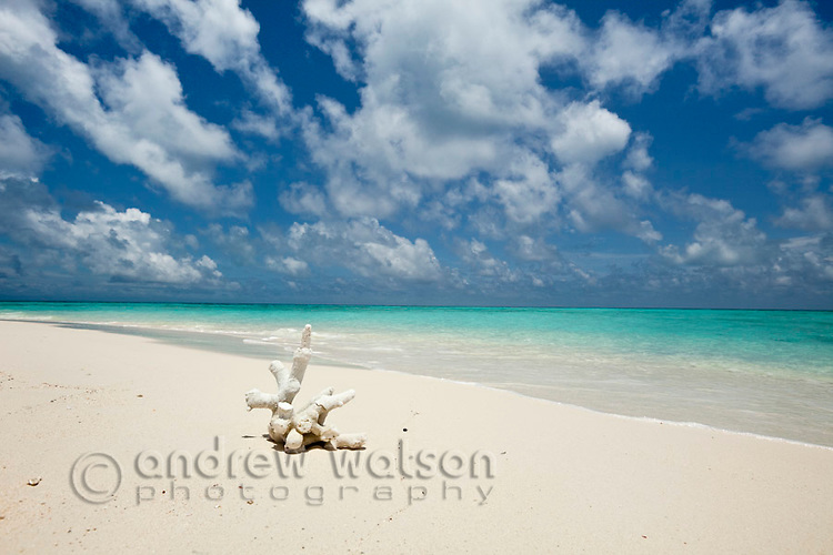 Coral on the shore of Vlassof Cay - a remote sand cay near Cairns.  Great Barrier Reef Marine Park, Queensland, Australia